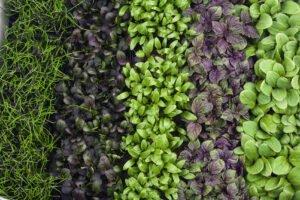 Grönsaksfrö grönsaker